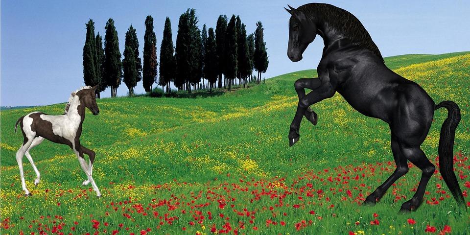 foal-73569_960_720